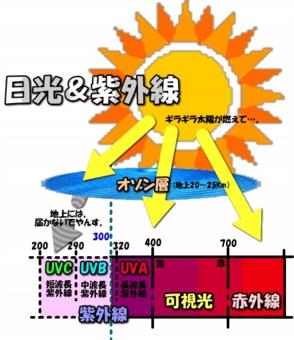 20037image11