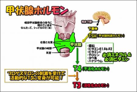 image1006