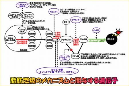 image944_1