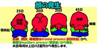 20036image14