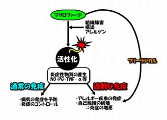 image1081