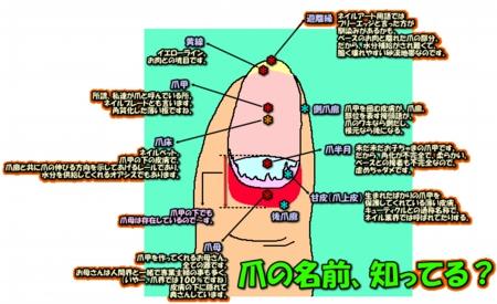 image233