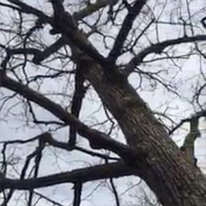 リスも木から落ちる